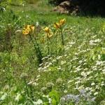 Samowystarczalne rolnictwo