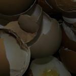 Skorupki jaj – zastosowanie