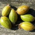 Warsztaty Permakultury – Zbieramy nasiona