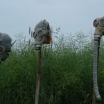 Jak wspomóc oczyszczanie organizmu z toksycznych produktów GMO?