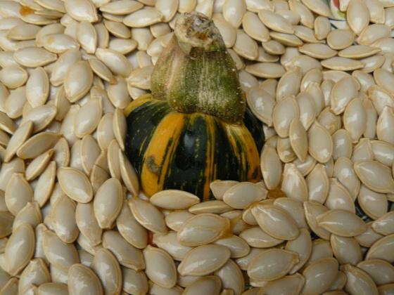 nasiona organiczne