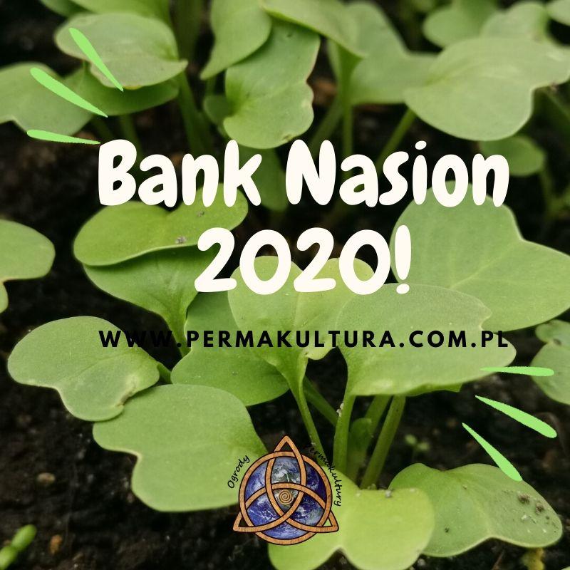 Bank nasion